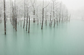 Pond in Japan, de Kent Shiraishi
