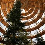 bavarian-forest-national-park-baumwipfelpfad_arquitectura Solucionista